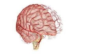 Головные боли - Кровообращение головного мозга