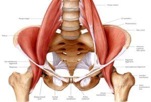 Грыжи дисков - Слабость глубокой мускулатуры тазового региона